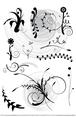 Floral Set