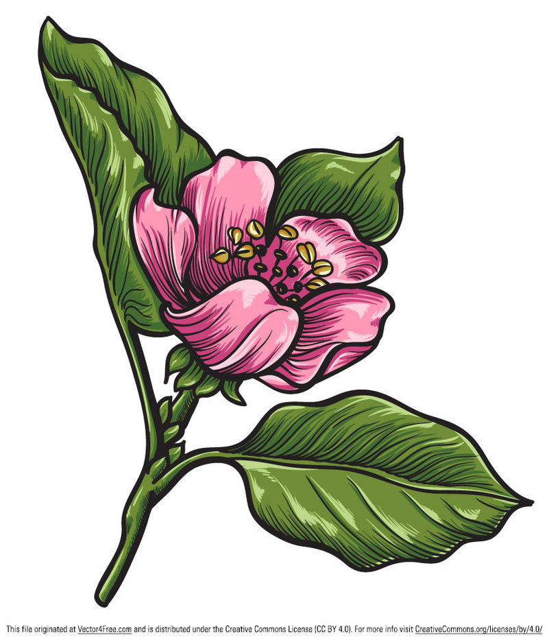Free Hand-Drawn Qunice Vector Flower
