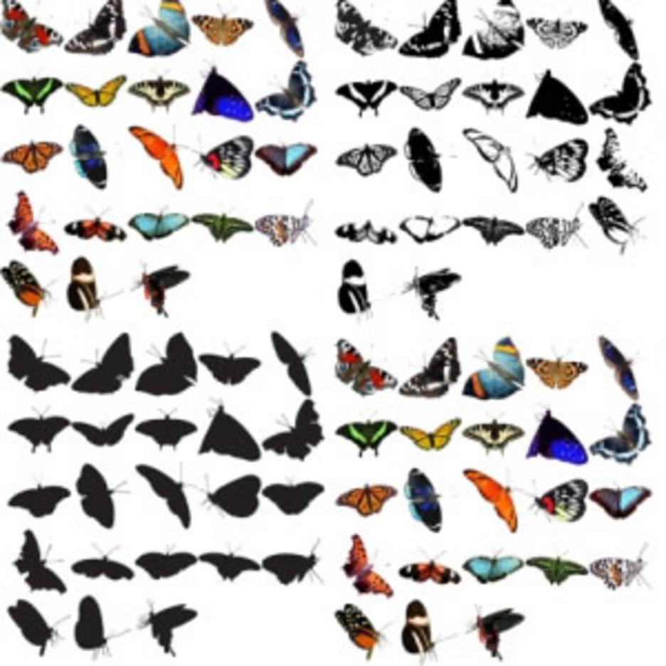 93 Butterflies