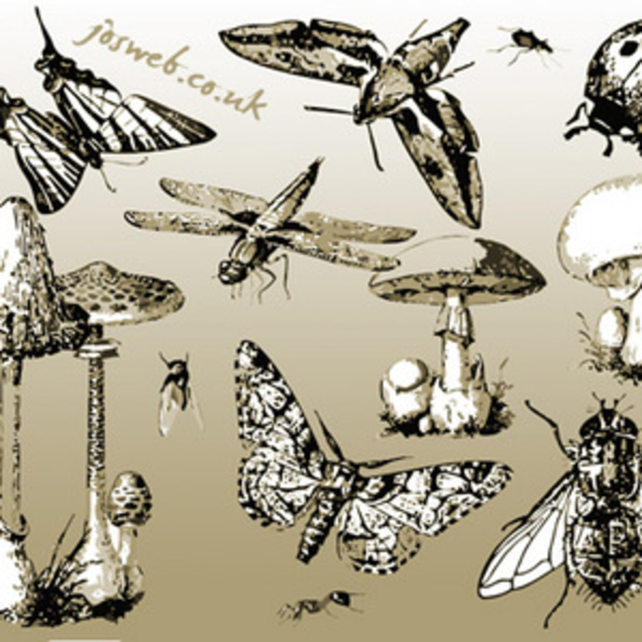Mushrooms & Insects