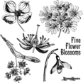 Antique Flower Blossom Illustrations