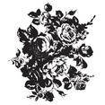 Free Flower Vector-4