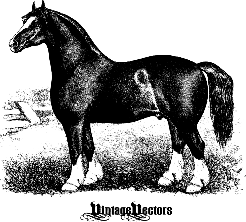 Horse Engraving - Antique