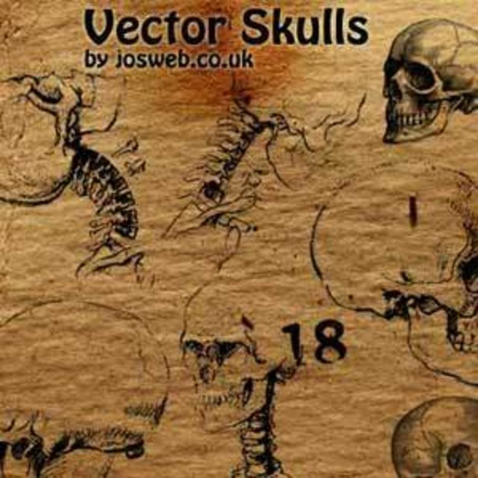 Illustrative Skull Vectors