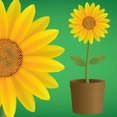 Vector Sunflower
