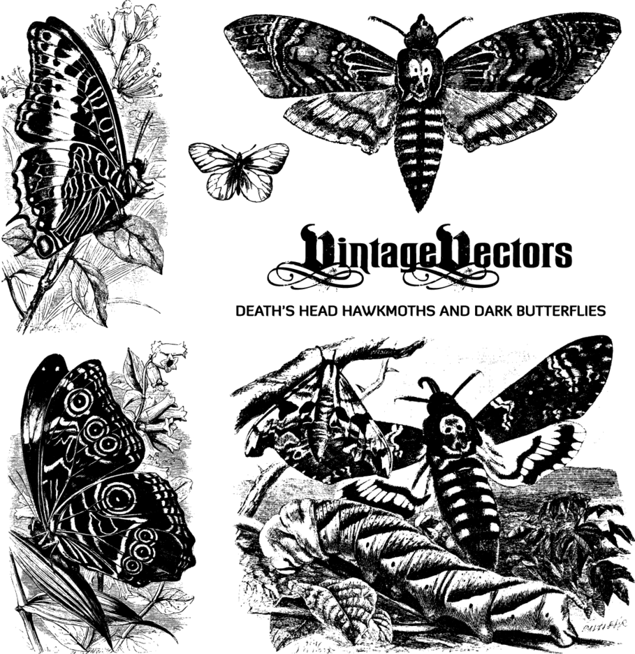 Death's Head Hawkmoth And Butterflies Antique Engravings