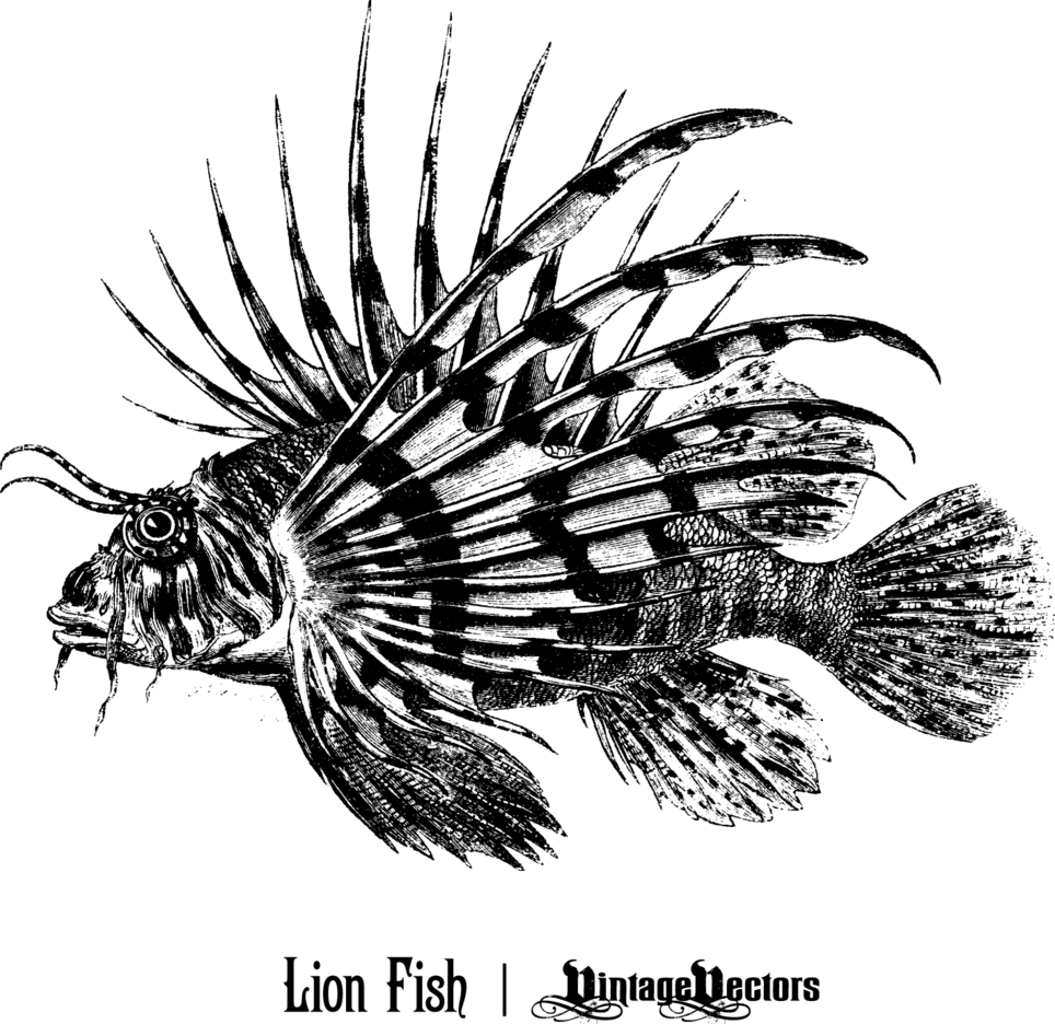 Lionfish Vector And Colored Image