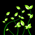 Dark Background With Petals