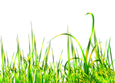 Abstract Gold Vector Grass