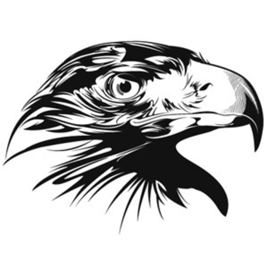 Detailed Eagle