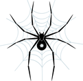 Spider Vector Art