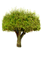 Detailed Vector Trees