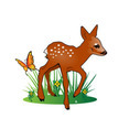 Fawn Illustration Vector