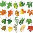 15 Different Vector Leaves