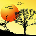 SUNSET BACKGROUND TREE
