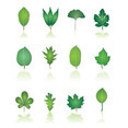 12 Green Leaf Collection