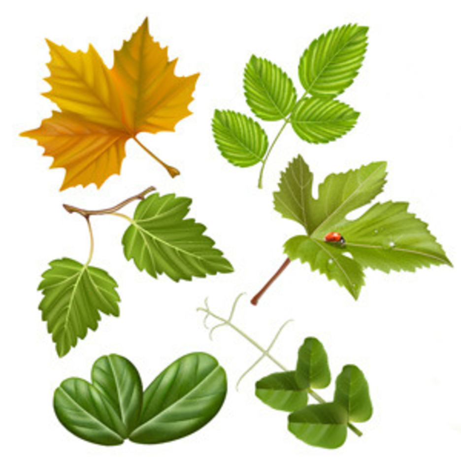High Quality Vector Leaves