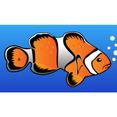 Clownfish Clip Art