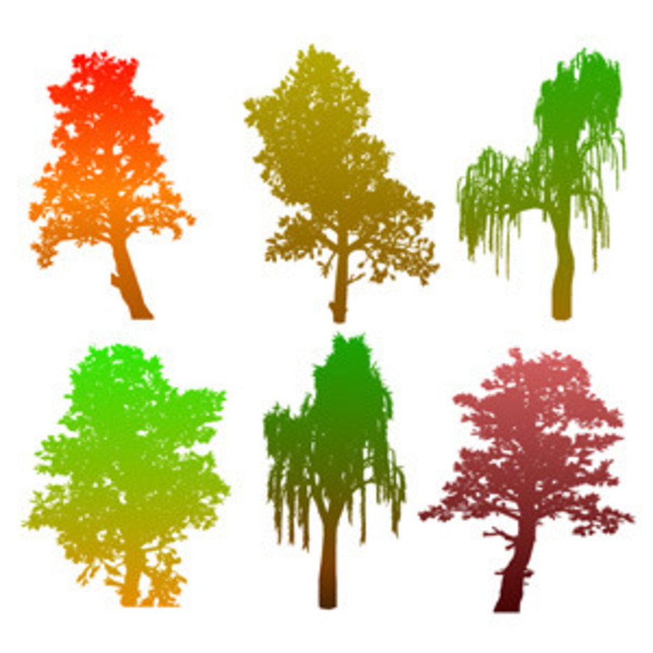 Colourful Tree Silhouettes