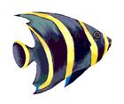 Vector Ocean Fish