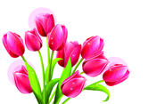Red Tulips Vector