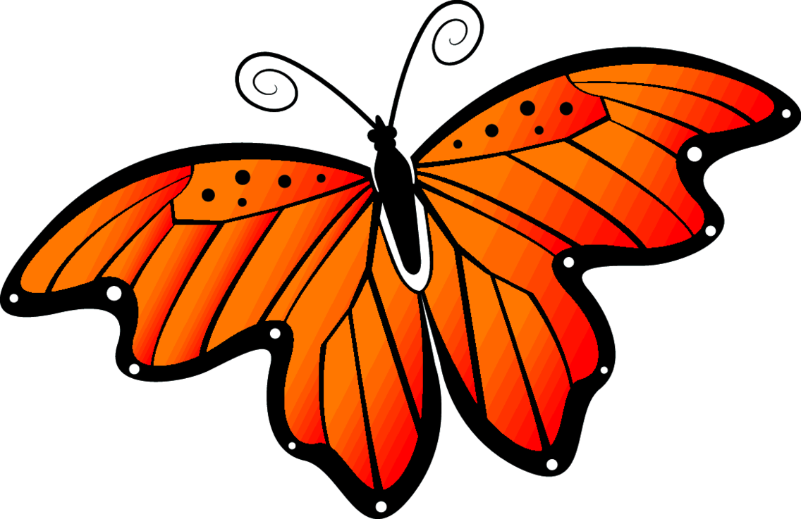 Butterfly With Orange Wings