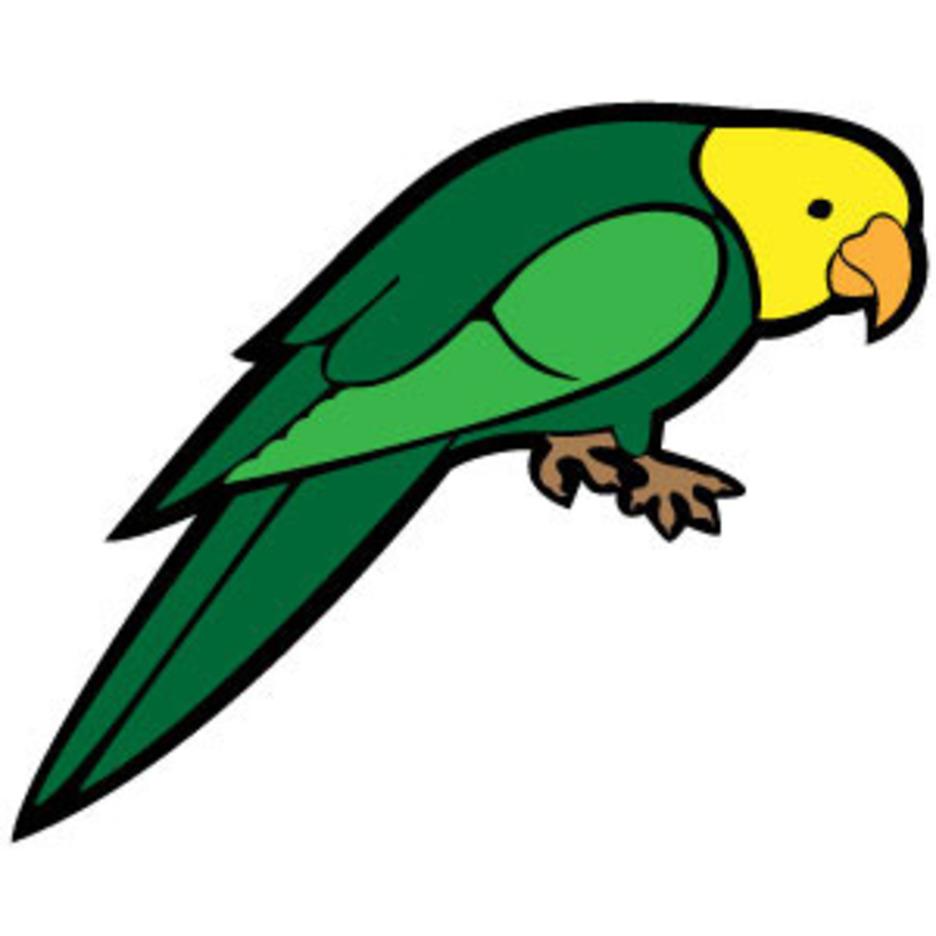 Parrot Vector Image VP