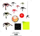 Black Red Tarantula