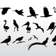 Various Bird Silhouettes