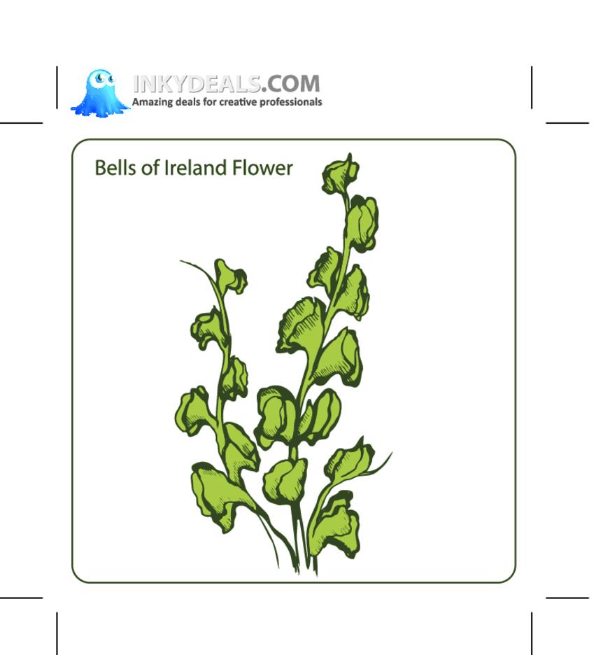 Bells Of Ireland Flower