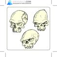 Skulls Set 1