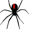 Spider - Black Widow Red Back