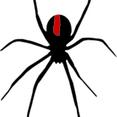 Spider - Black Widow Red Back