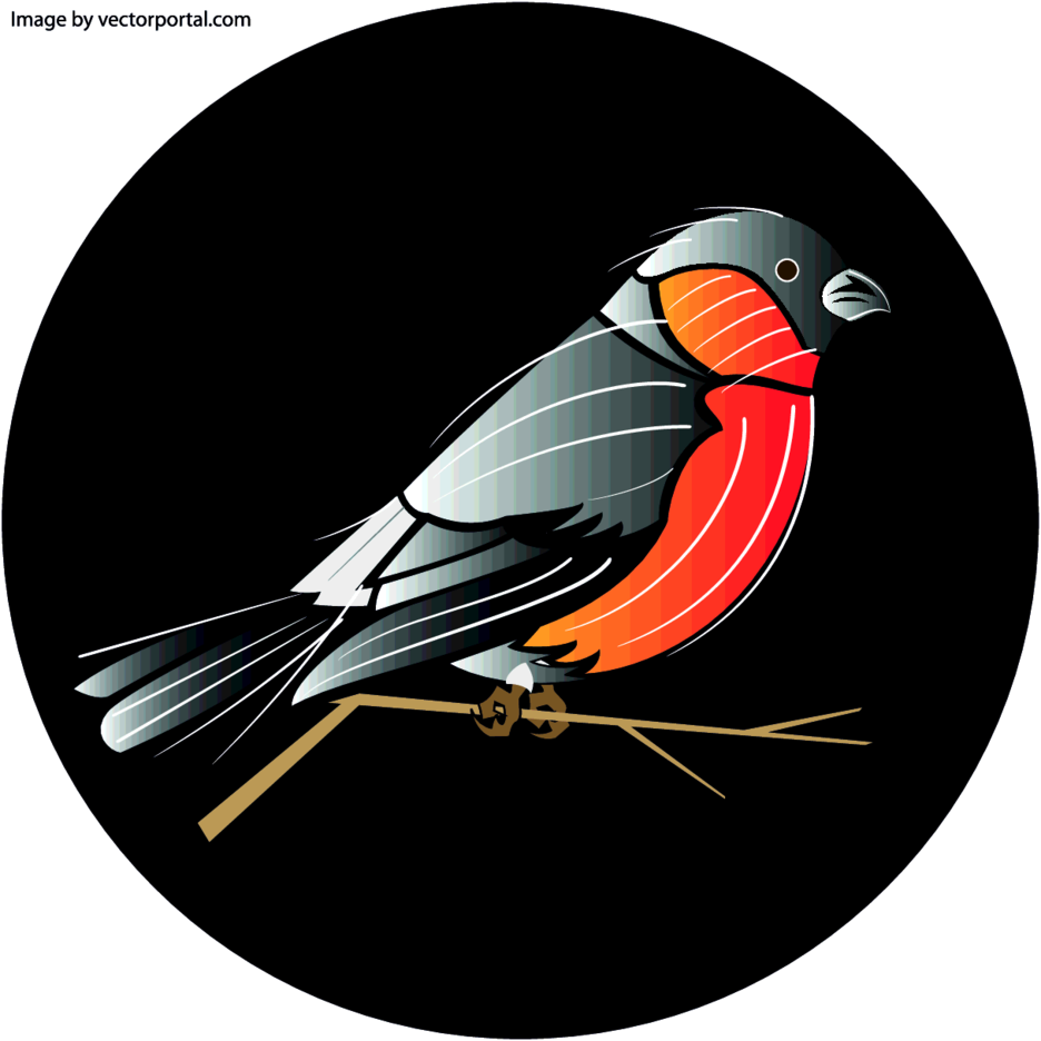 Bird Vector Illustration