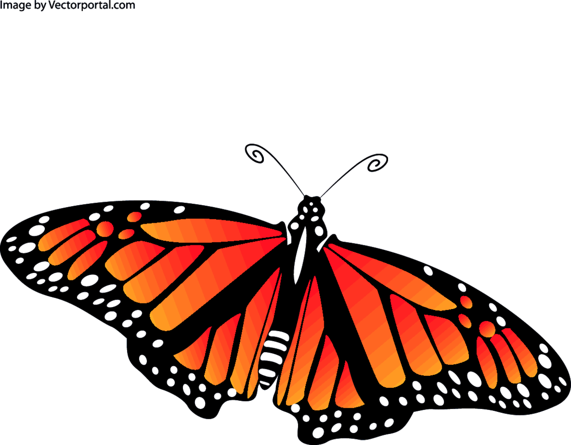 Butterfly Vector Image VP
