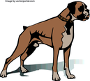 Boxer Dog Vector Image