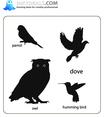 Birds 21