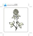 Floral 100
