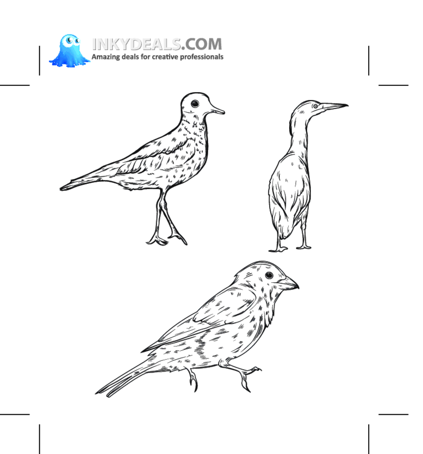 Bird 50