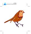 Birds 51
