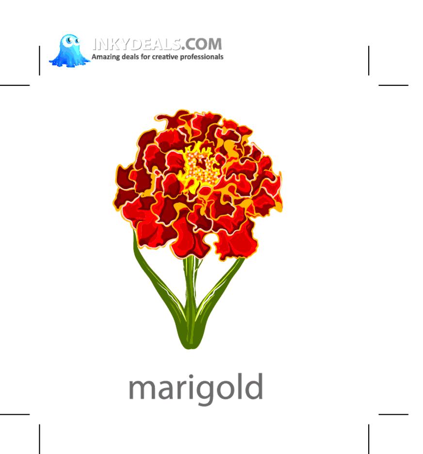 Vector Marigold Flower
