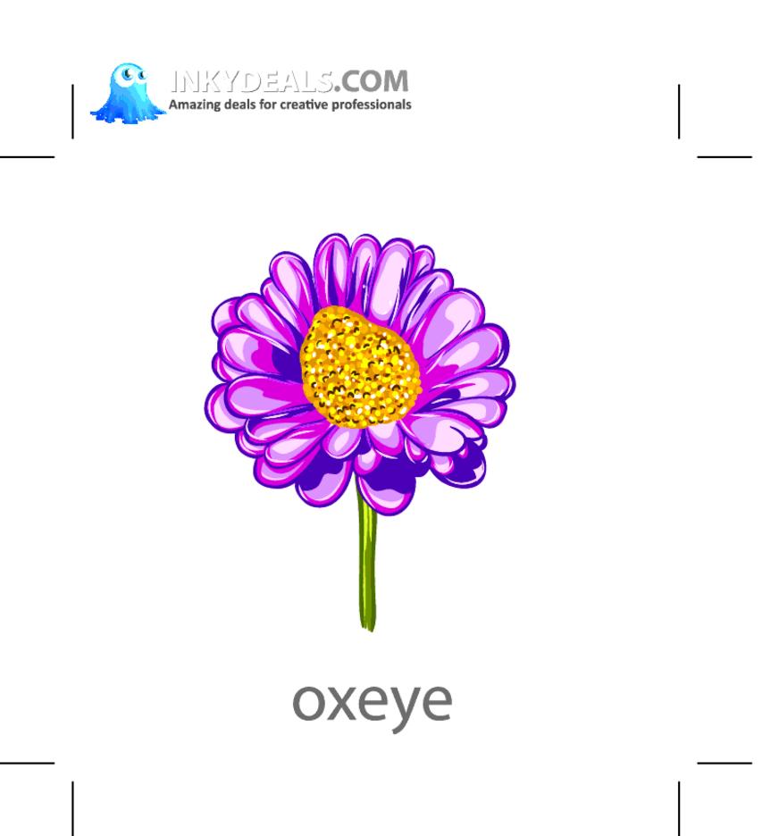 Oxeye Vector Flower