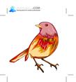 Birds 54