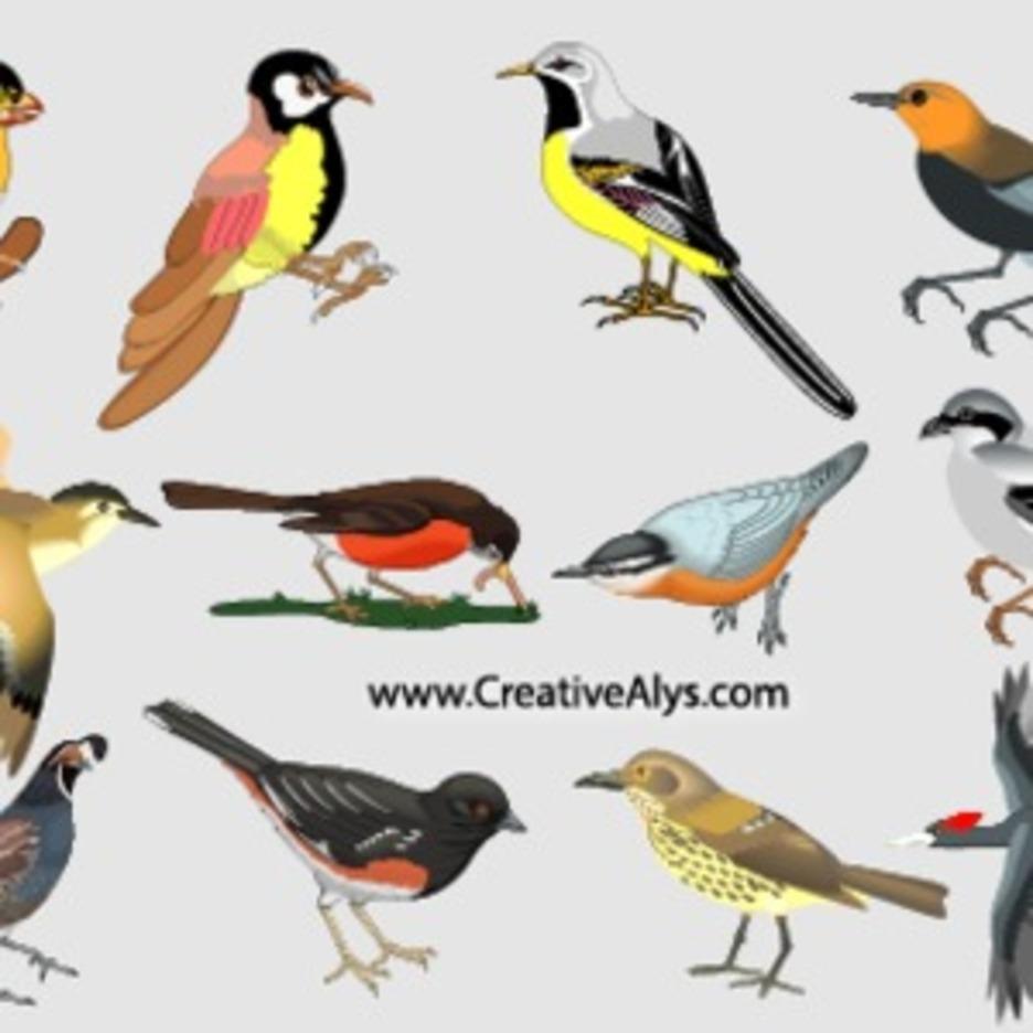 Beautiful Realistic Birds In Vector