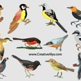Beautiful Realistic Birds In Vector
