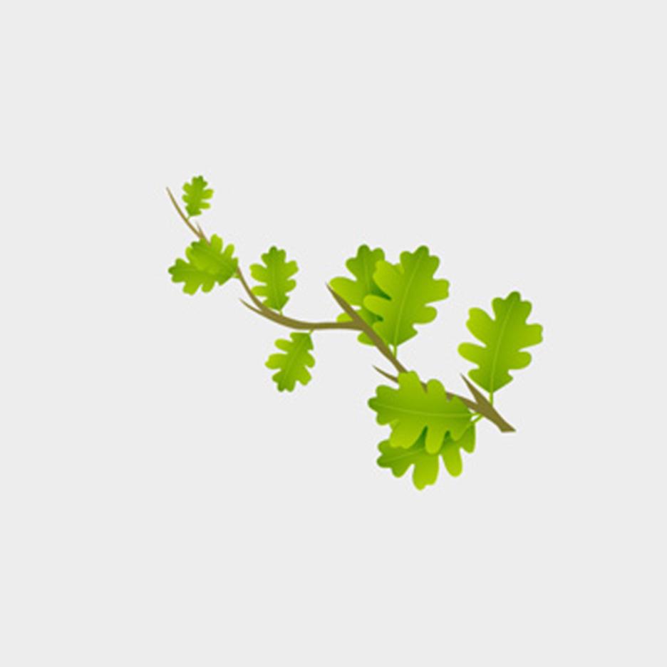 Green Branch Vector