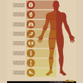 Free Male Body Infographics Vectors
