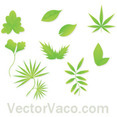 Spring Free Vector Leaves