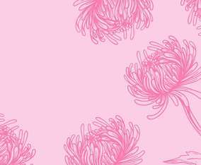 Chrysanthemum Flower Background